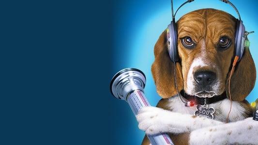 Image Comme chiens et chats