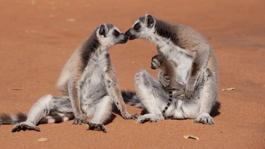 Image L'île des lémuriens : Madagascar