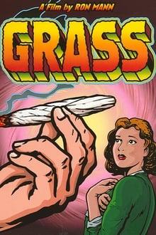 Image Grass