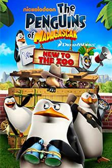 Image Les Pingouins de Madagascar : Du nouveau au zoo