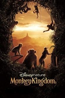 image Au Royaume des singes