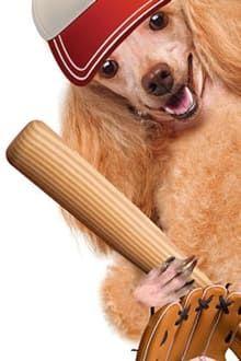 Image Hound Dogs