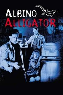 Image Albino Alligator