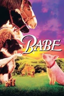 Image Babe, le cochon devenu berger